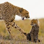 Parenting in the world of animals